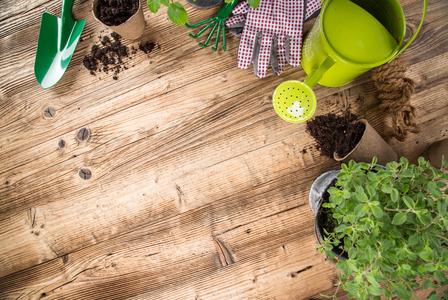 4 dicas para planejar seu jardim